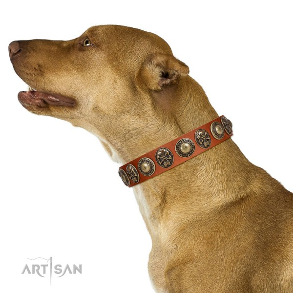 Artisan dog collar with buckle closure for Pitbull