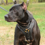Pitbull Harnesses UK Bestsellers | Harness for Pitbull, Handmade