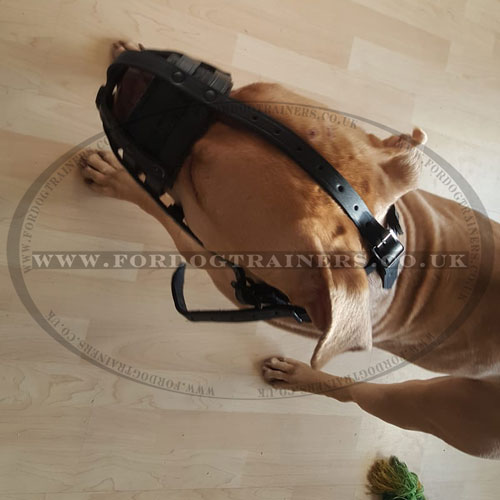 choose leather dog muzzle online