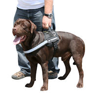 Harness for Labrador | Reflective Dog Harness with Sigh Patches
