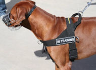 Rhodesian Ridgeback Dog Harness, UK - Better Control and Comfort