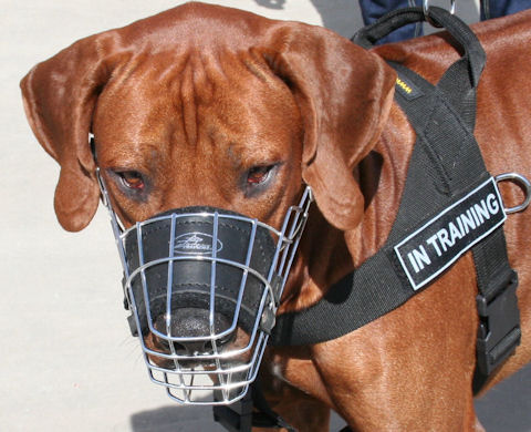 Best Design Wire Dog Muzzle for Rhodesian Ridgeback Dog