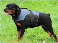 Nylon Dog Harness Vest | Rottweiler Harness UK for Outdoors