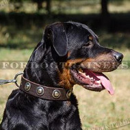 Elegant Leather Dog Collars with Round Plates for Rottweiler