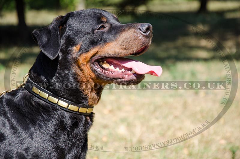 Good Collars For Strong Dogs