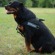 Rottweiler Harness UK Bestseller | Non Pull Dog Harness