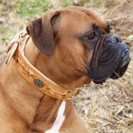 Royal Dog Collar for Boxer Style | Padded Dog Collar with Braids