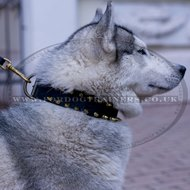 Spiked Dog Collar For Husky