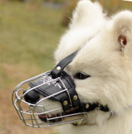 Samoyed Dog Wire Muzzle