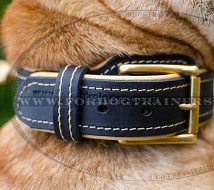 Shar Pei Dog Collar Soft Nappa Padded Design with a Strong Belt Buckle