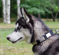 Siberian Husky Dog Collar | Nylon Dog Collar for Husky