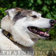 Siberian Husky Dog Collars with Brass Plates