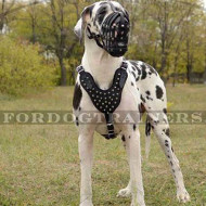 Great Dane Dog Harness with Pyramids Design