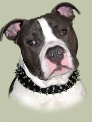 Leather Two-Rows Spiked Dog Collar for Pitbull
