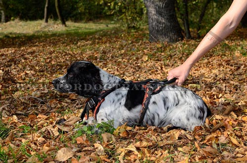 dog harness with handle Springer Spaniel