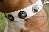 New Staffy Collars UK Best Qulity! Studded Dog Collars