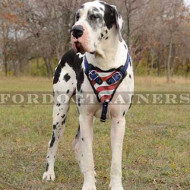 "Padded Dog Harness for Strong Dog Training ""American Pride"""