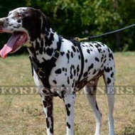 Strong Dog Harness for Large Dog Training - Best for Dalmatian