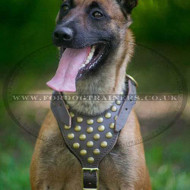Belgian Malinois Dog Harness Super Design with Brass Studs