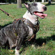 Leather Studded Dog Harness for Large Dogs and Medium Breeds