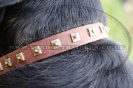 Designer Dog Collars for Swiss Mountain Dog | Leather Dog Collar