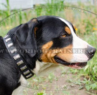 Unusual Dog Collars with Plates | Swiss Mountain Dog Collars UK