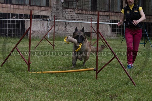 Jump Course for Malinois Agility Training with Jute Bite Tug