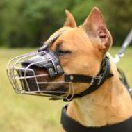 Every day wire basket dog muzzle for Pit Bull Terrier