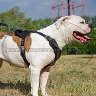 V-Neck American Bulldog Leather Harness for Dog Walking & Training