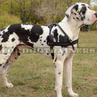 Weight Pulling, Tracking Dog Leather Harness UK