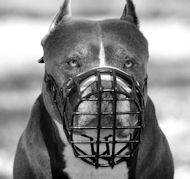 Dog Muzzle for Amstaff Rubberized Wire | Safe Muzzle for Staffy