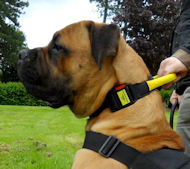 Dog Collar with Handle for Boerboel Mastiff | Mastiff Collars UK