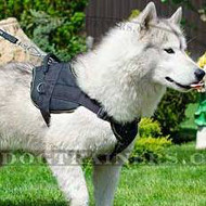 Akita Husky Dog Harness with Handle | Nylon Dog Harness NEW