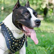 American Staffordshire Terrier Dog Harness | Luxury Dog Harness