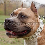 Amstaff Collars UK New Limited Edition | New Designer Dog Collar