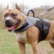 Warm Amstaff Dog Jacket with Handle for Support or Control