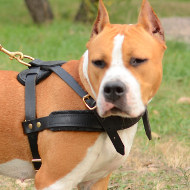 Leather Dog Harness for Tracking/ Walking/ Sport of Your Amstaff