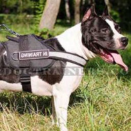 Nylon Harness with Reflexive Strap and Sign Patches for Staffy