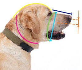 How to measure muzzle