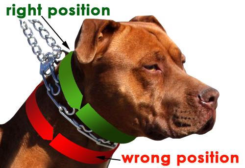 Can Dogs Be Injured By Pinch Or Prong Collar