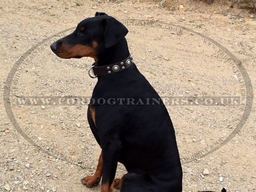 Brown Leather Dog Collar for Doberman