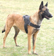 Dog Harness for Malinois Shepherds for Multipurpose Use