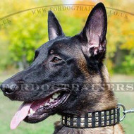 Belgian Malinois UK Dog Collars | Designer Dog Collars NEW