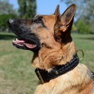 Braided Leather Dog Collar for German Shepherd, 2 Ply