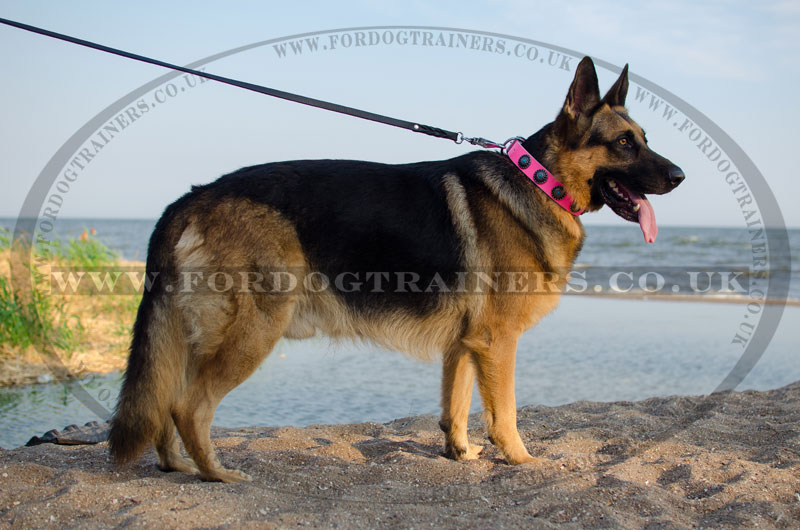 Designer Pink Leather Dog Collar For German Shepherd