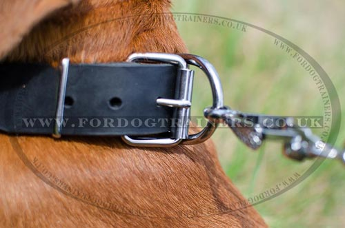 Classic Leather Dog Collar for Dogue De Bordeaux Mastiff