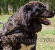 Stitched Leather Dog Pulling Harness for Caucasian Shepherd