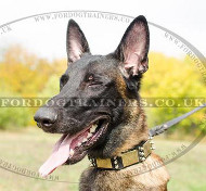 Best Dog Collars for Belgian Malinois | Leather Collars Spiked