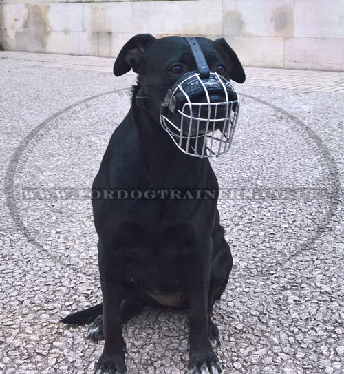 best dog muzzle for Labrador