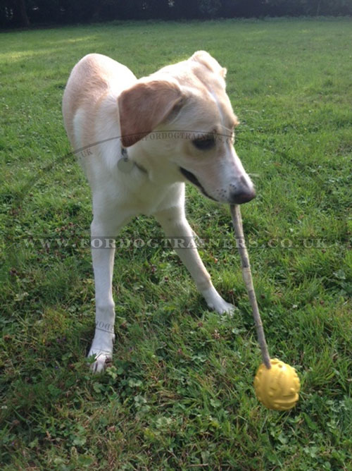 Dog Rubber Ball on String